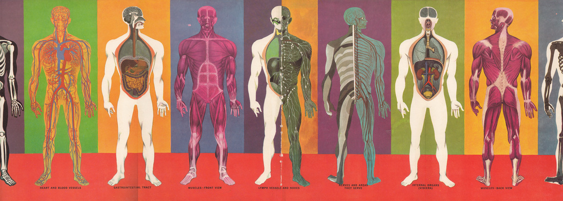 human body systems - home page, Human Body